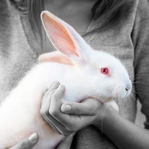 galeria-conejo